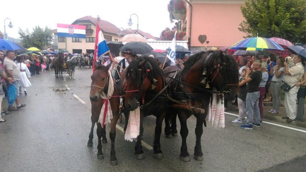 mb konji2